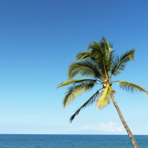 722337-palm-tree-and-ocean